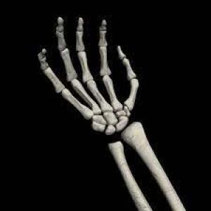 Антиоксидант из овощей может помочь в регенерации костей